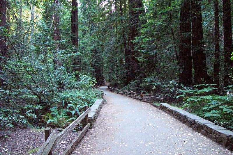 Muir Woods near San Fransisco, California on my California Travel Bucket List