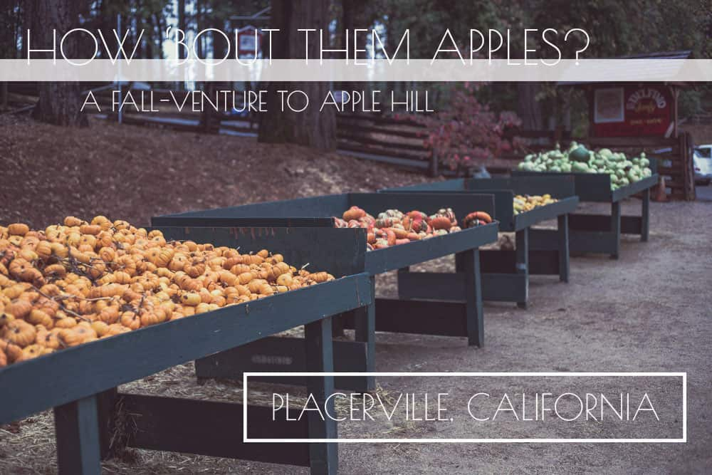 Fall in Apple Hill in Placerville, California