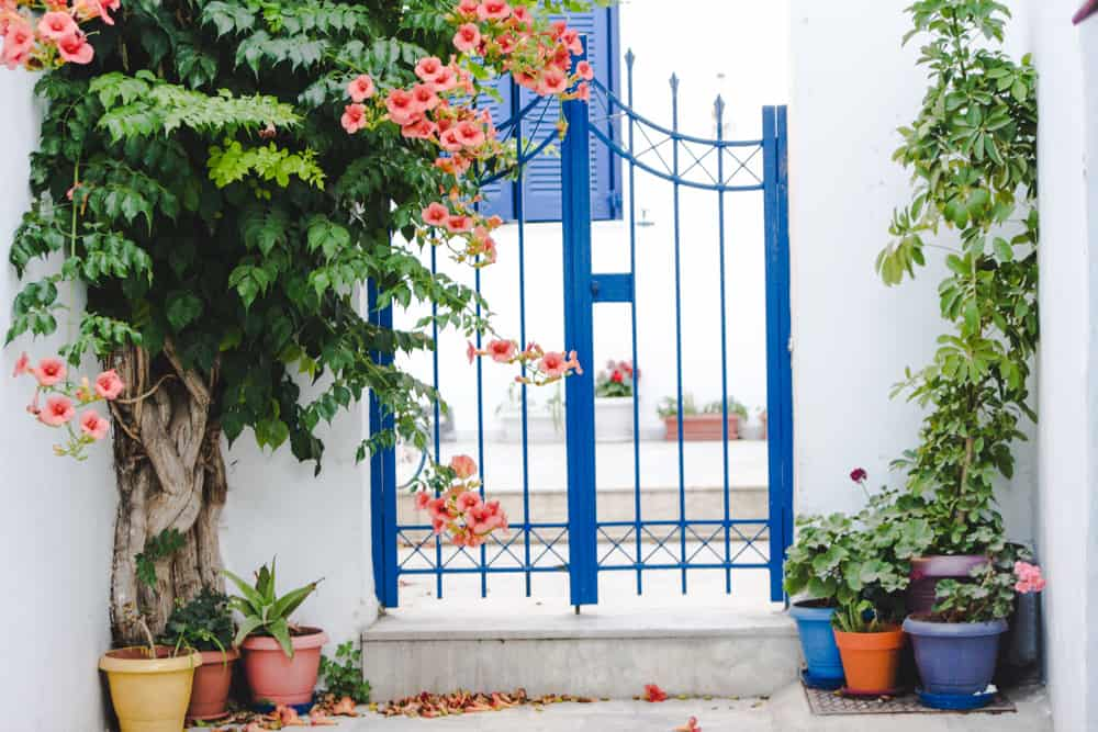 orange flowers on front porch with blue gate on the streets of Paros in Greece
