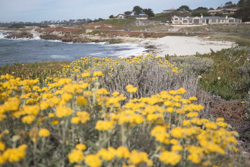 A beach, house, and flowers on my bike ride through the 17-Mile Drive in Monterey, California