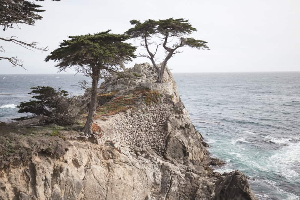The Lone Cypress Tree on a cliff overlooking the ocean during a bike ride on the 17-Mile Drive in Monterey, California