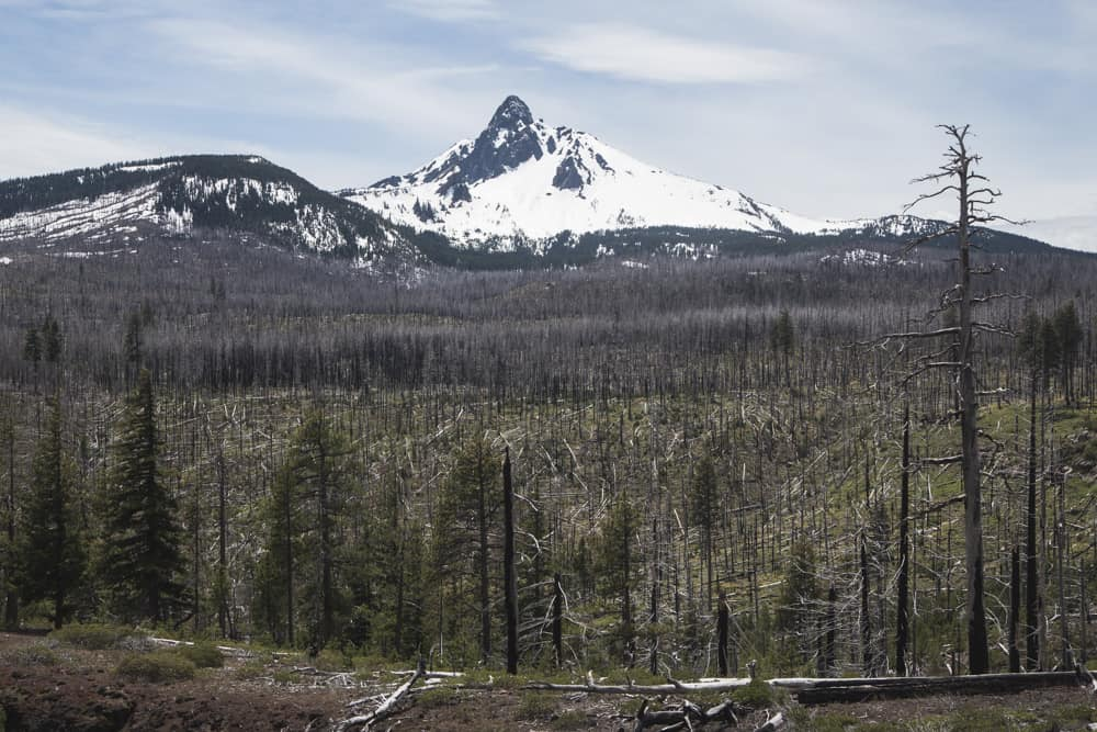 Snow-capped mountain in Oregon surrounded by pine trees - truth behind the photo