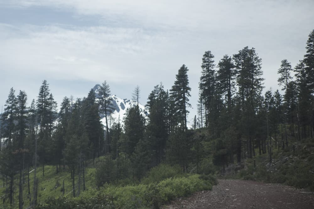 A dirt road surrounded by trees and overlooked by a snow-capped mountain in Oregon