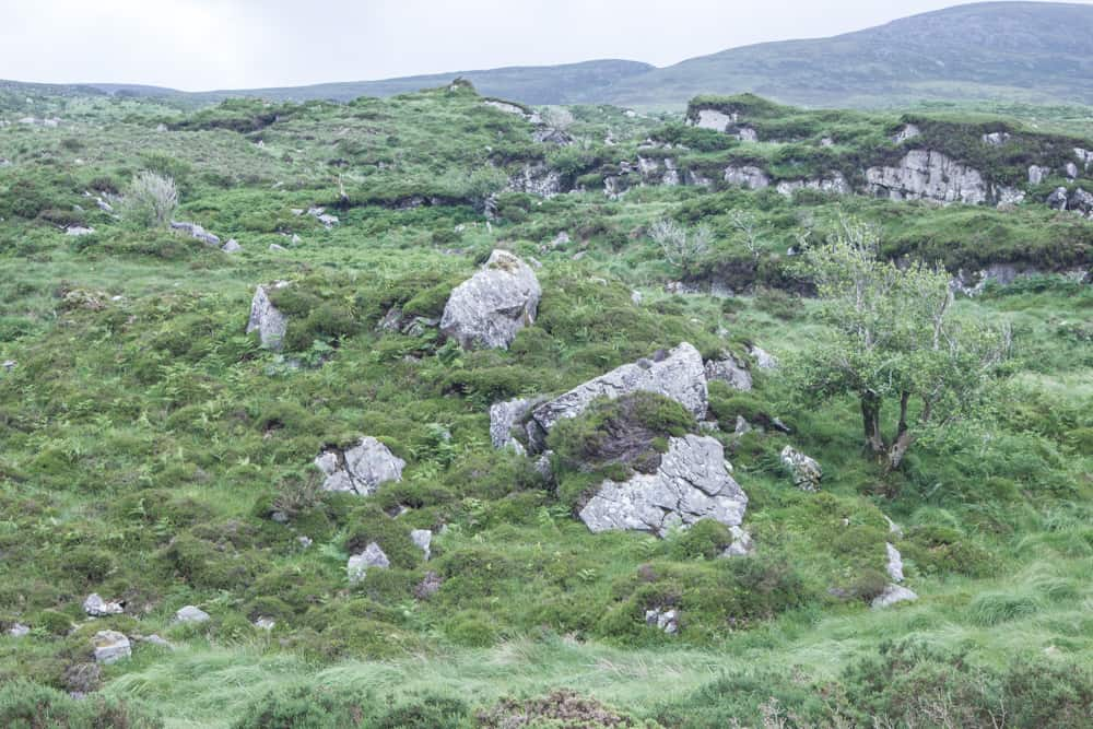 The trail up to Torc Mountain in Killarney National Park is surrounded by grass, rocks, and a few trees