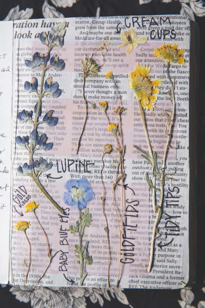 Pressed flowers in a travel journal