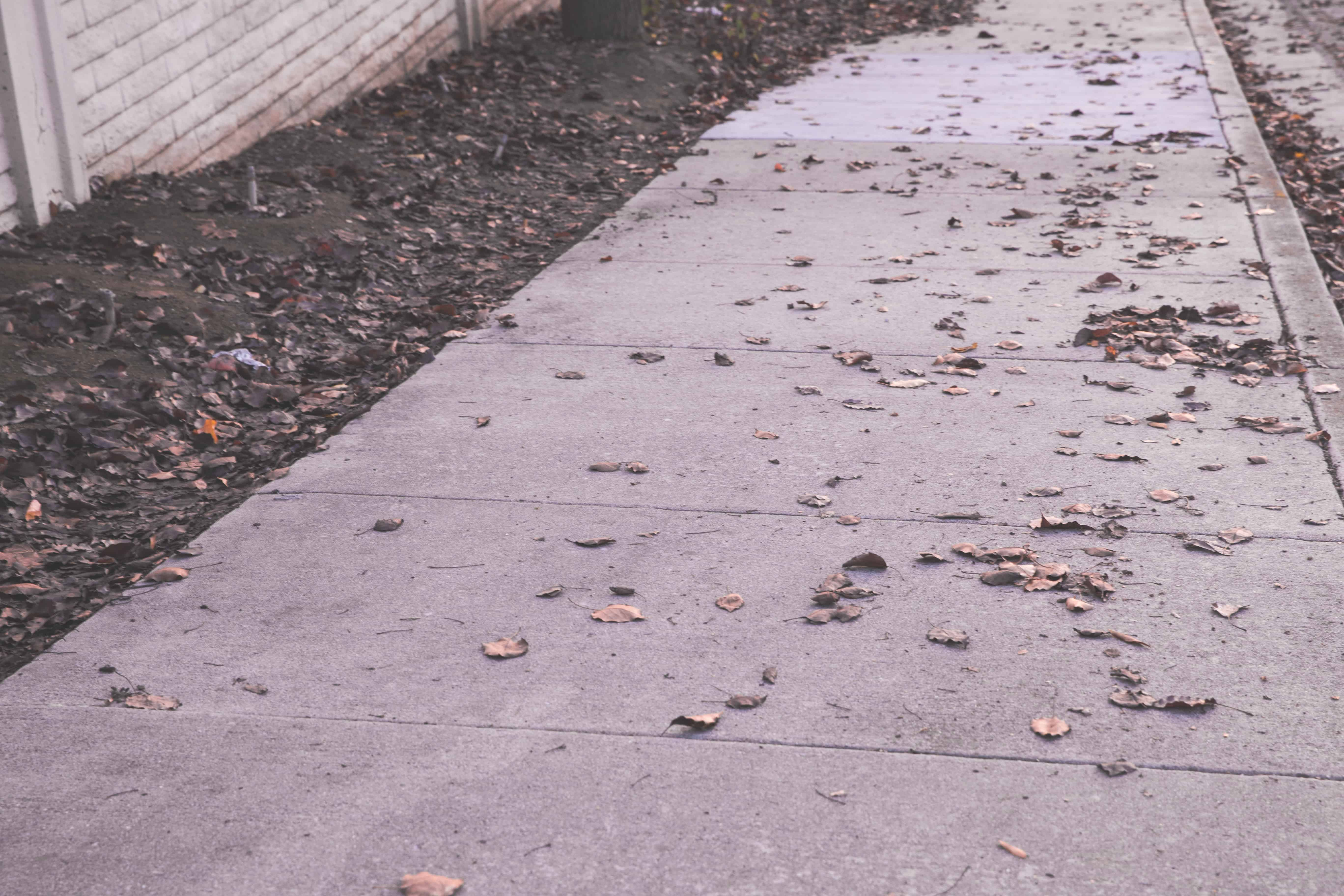 Leaves on the sidewalk in San Jose, California in the South Bay Area - the lack of seasons is one of the reasons I'm ready to move out of the Bay Area!