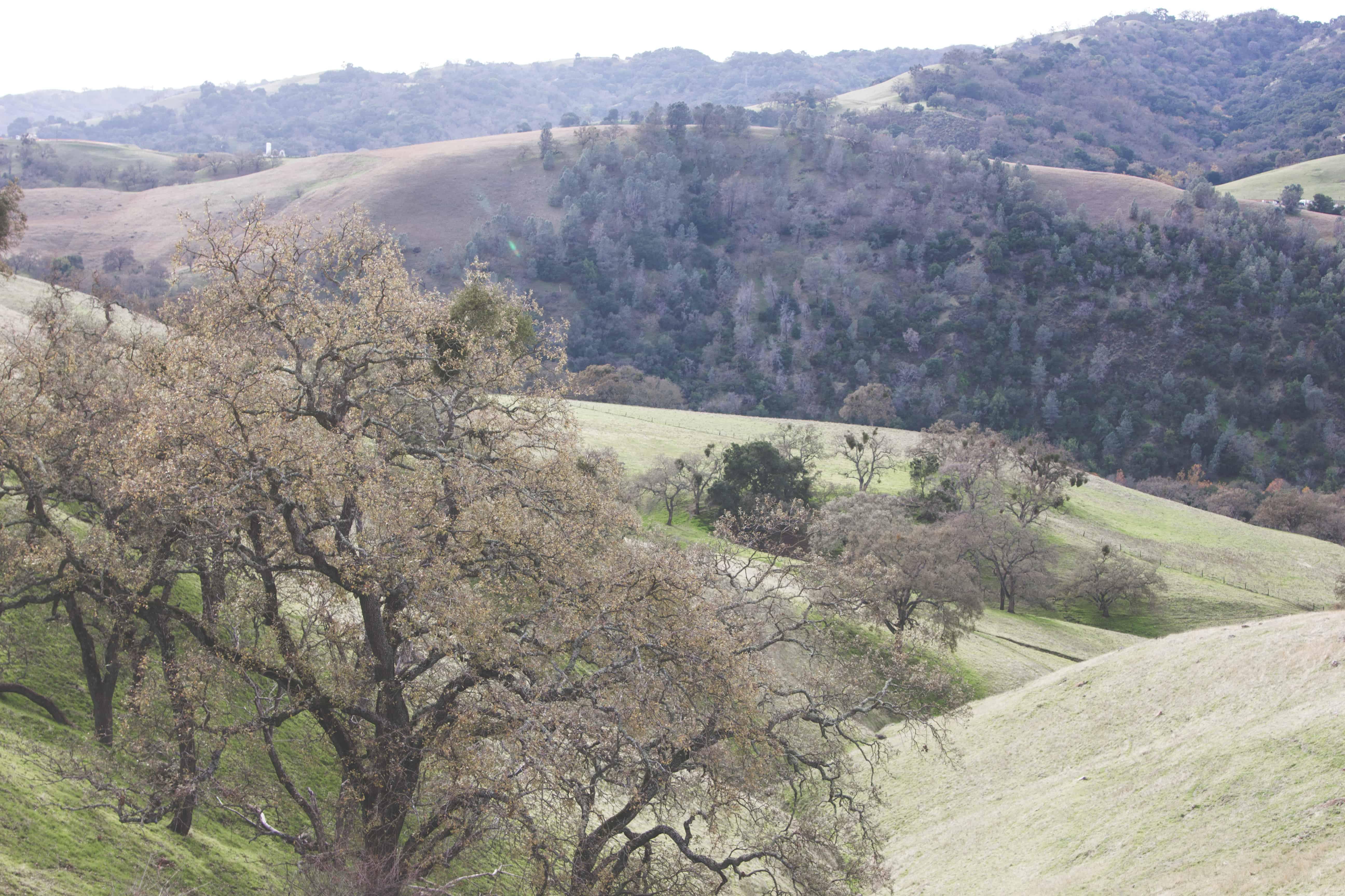 Sunol Regional Wilderness Park near the Bay Area in California