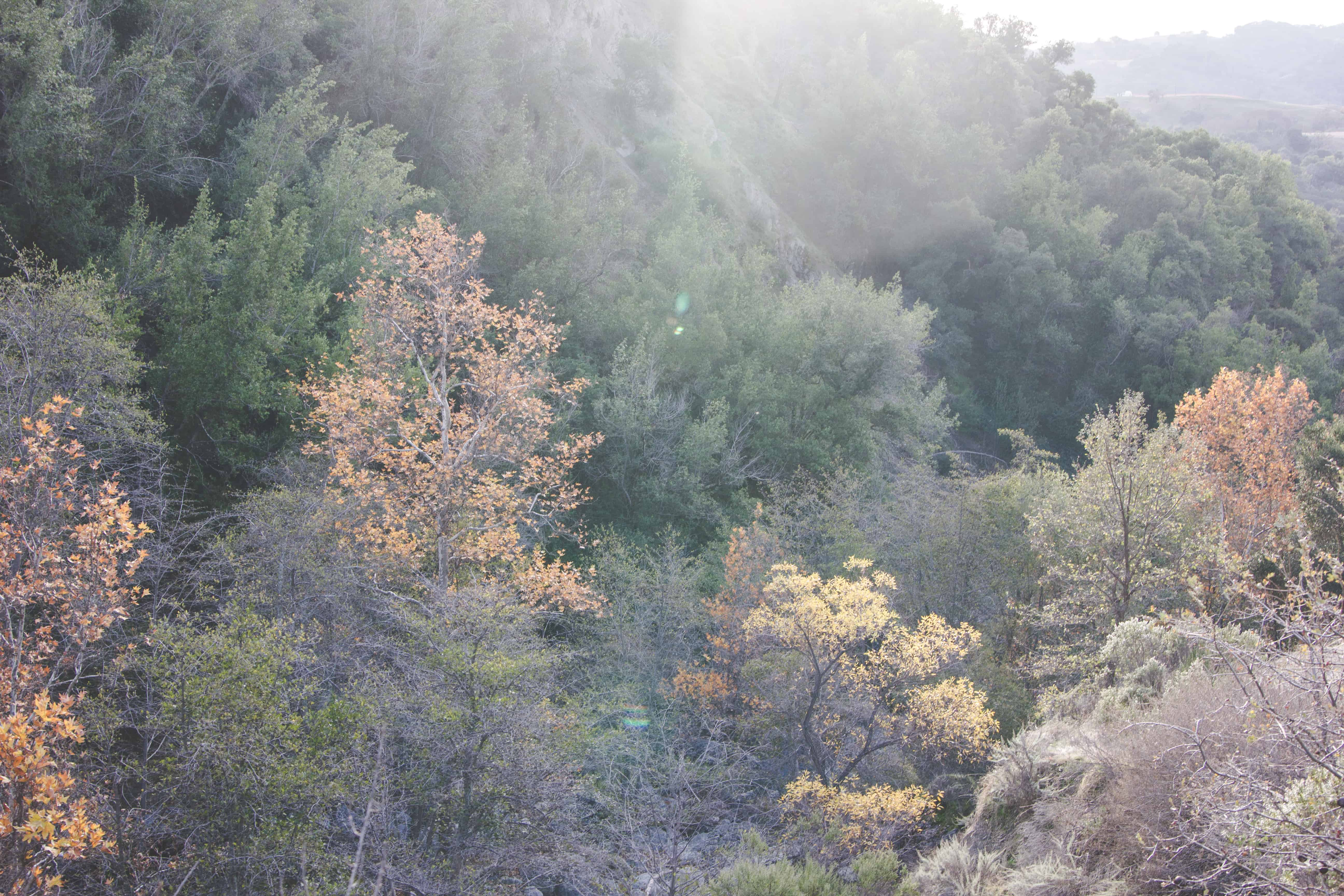 Trees in Sunol Regional Wilderness Area in Cailfornia near the Bay Area