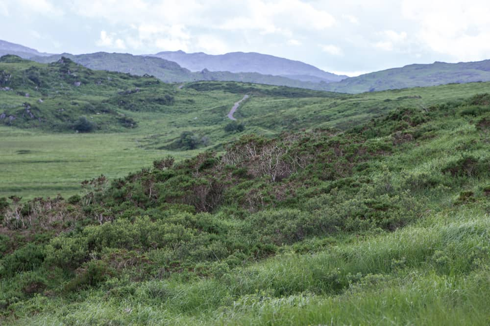 Killarney National Park in Ireland is full of green grass and trees and mountains