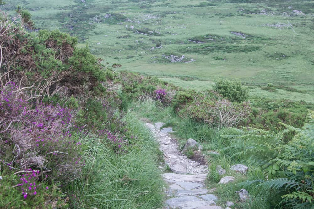 The path up Torq Mountain in Killarney National Park is surrounded by very green plants