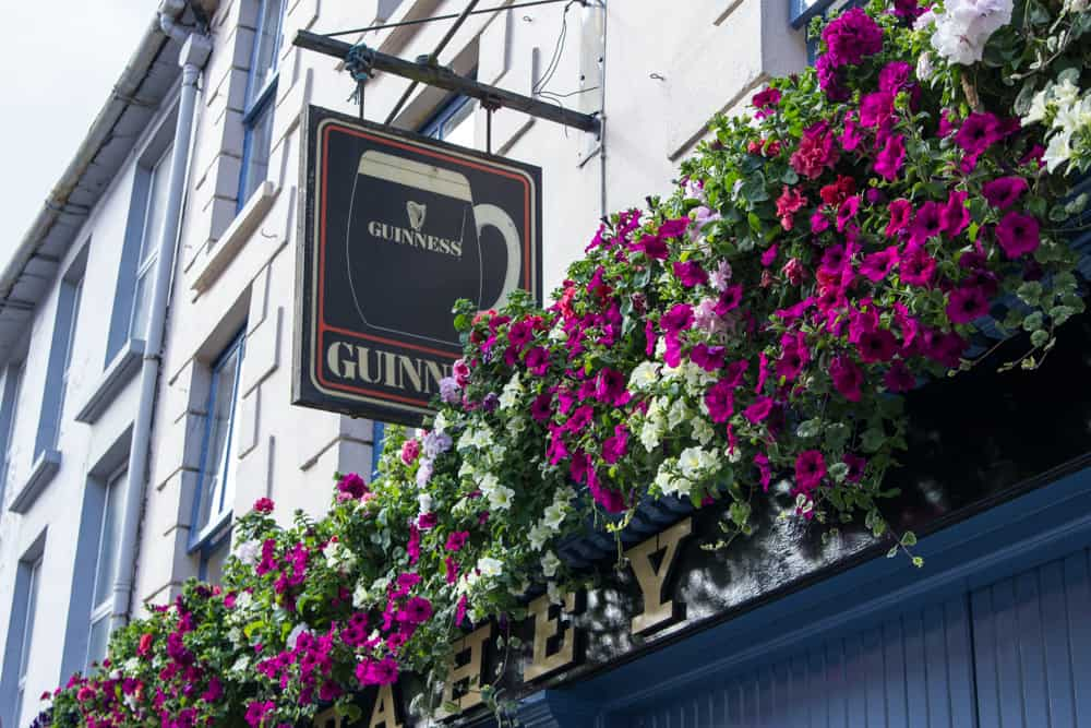 flowers and guinness in ireland