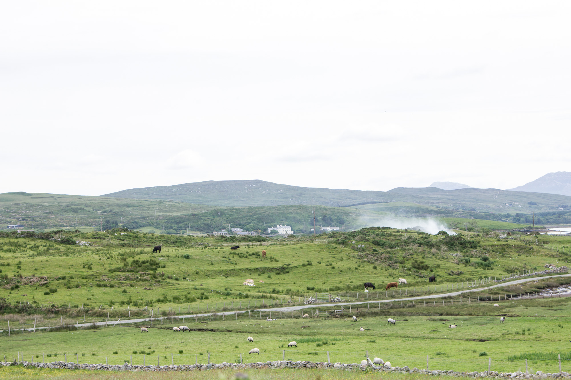 The Sky Loop Drive in Ireland is in the countryside, with green hills, cute houses, and pastures full of sheep and cows