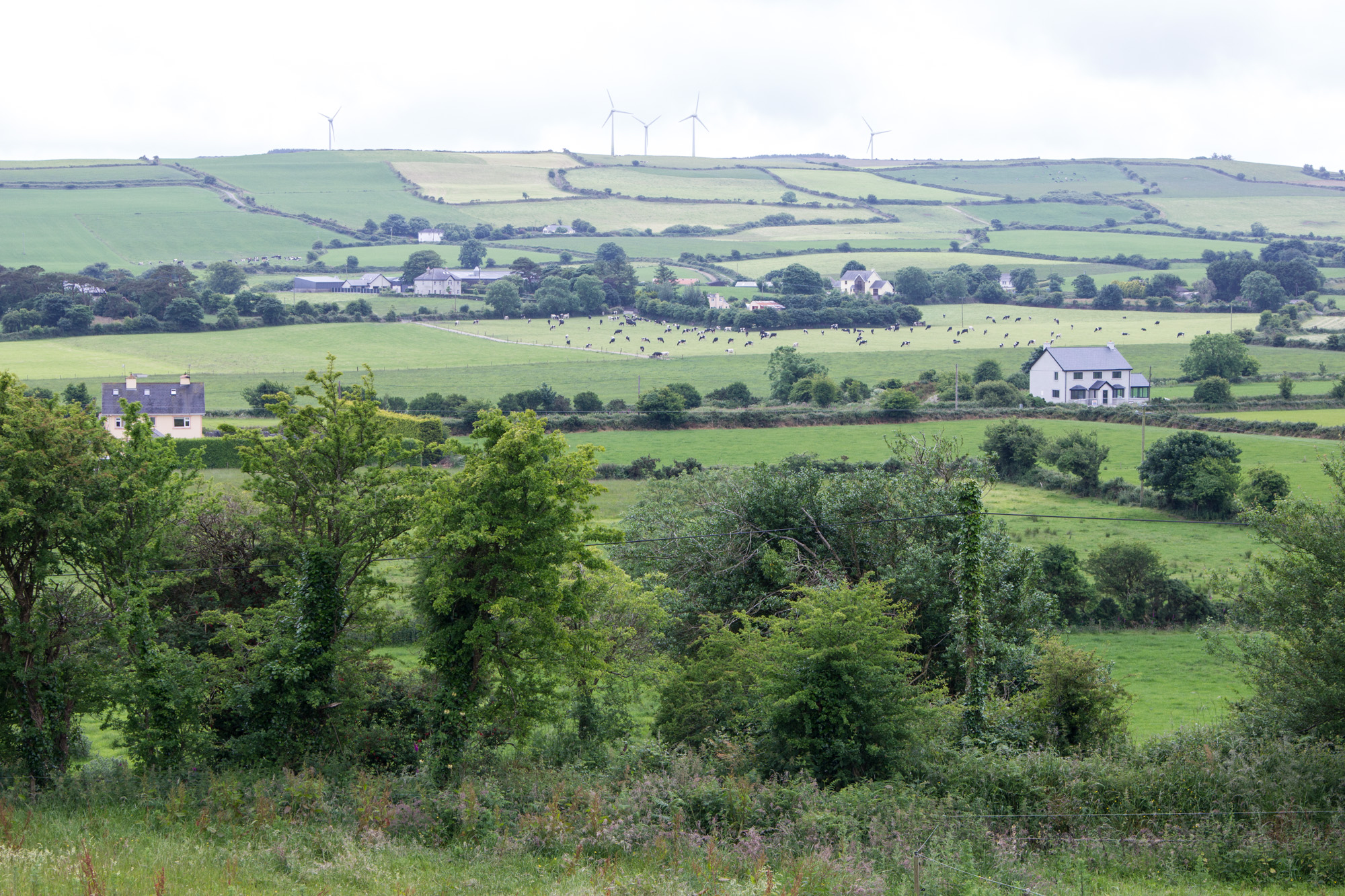 View of green fields, trees, and houses in the countryside in Ireland