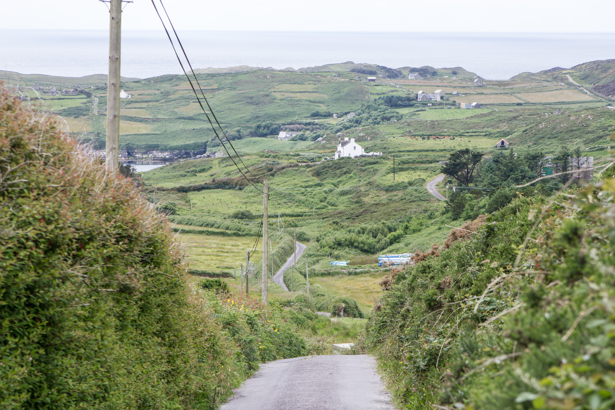 View of grass and houses in the countryside from a high road in Cape Clear Island in Ireland
