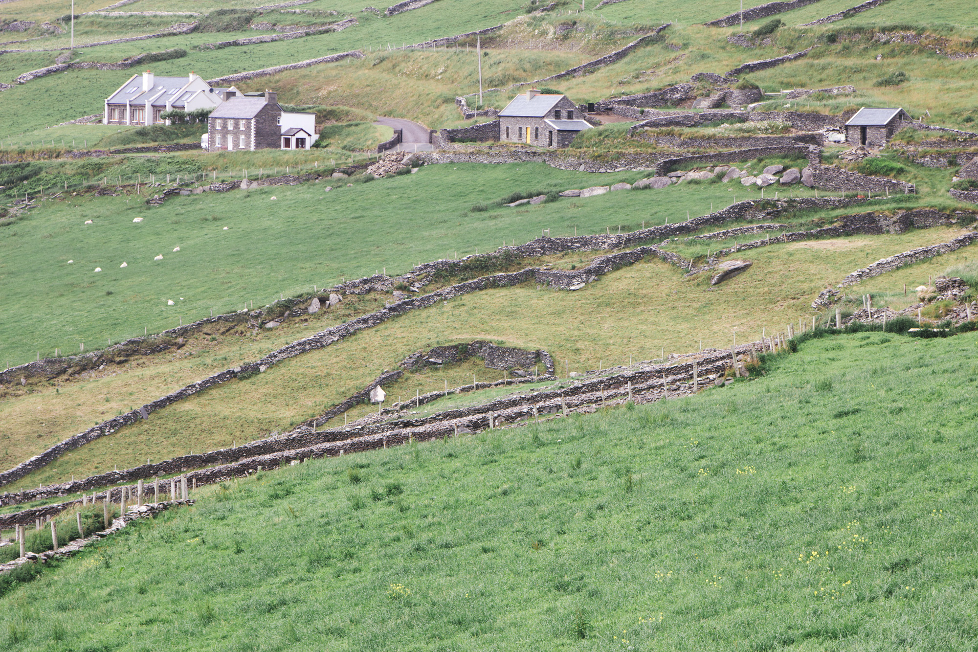 Hill with houses and stone fences on Slea Head Drive in Dingle in Ireland