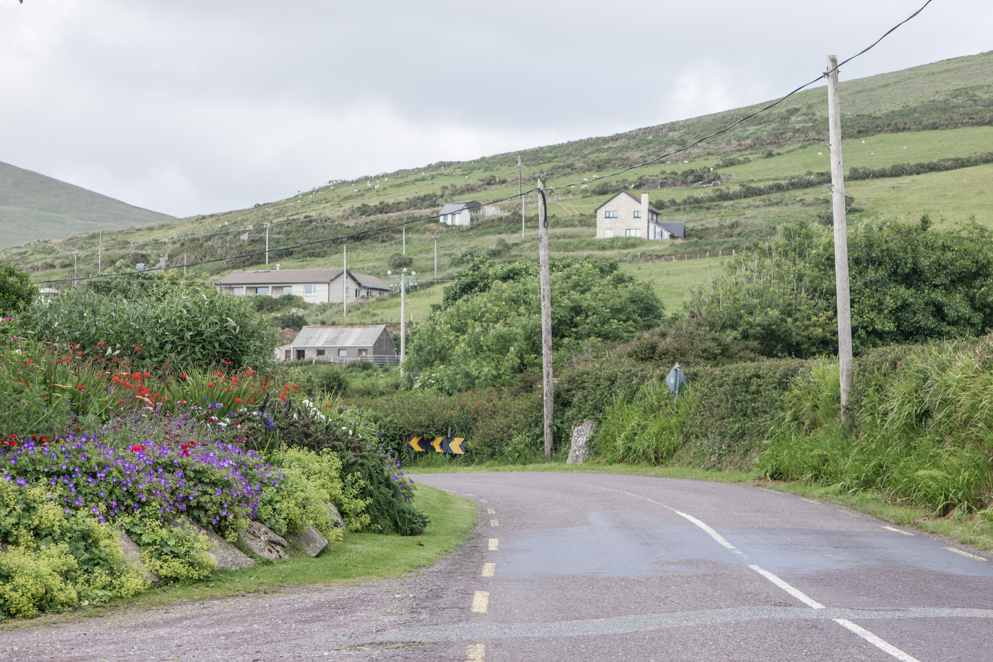 Road on Slea Head Drive in Ireland surrounded by green grassy hills and cute houses