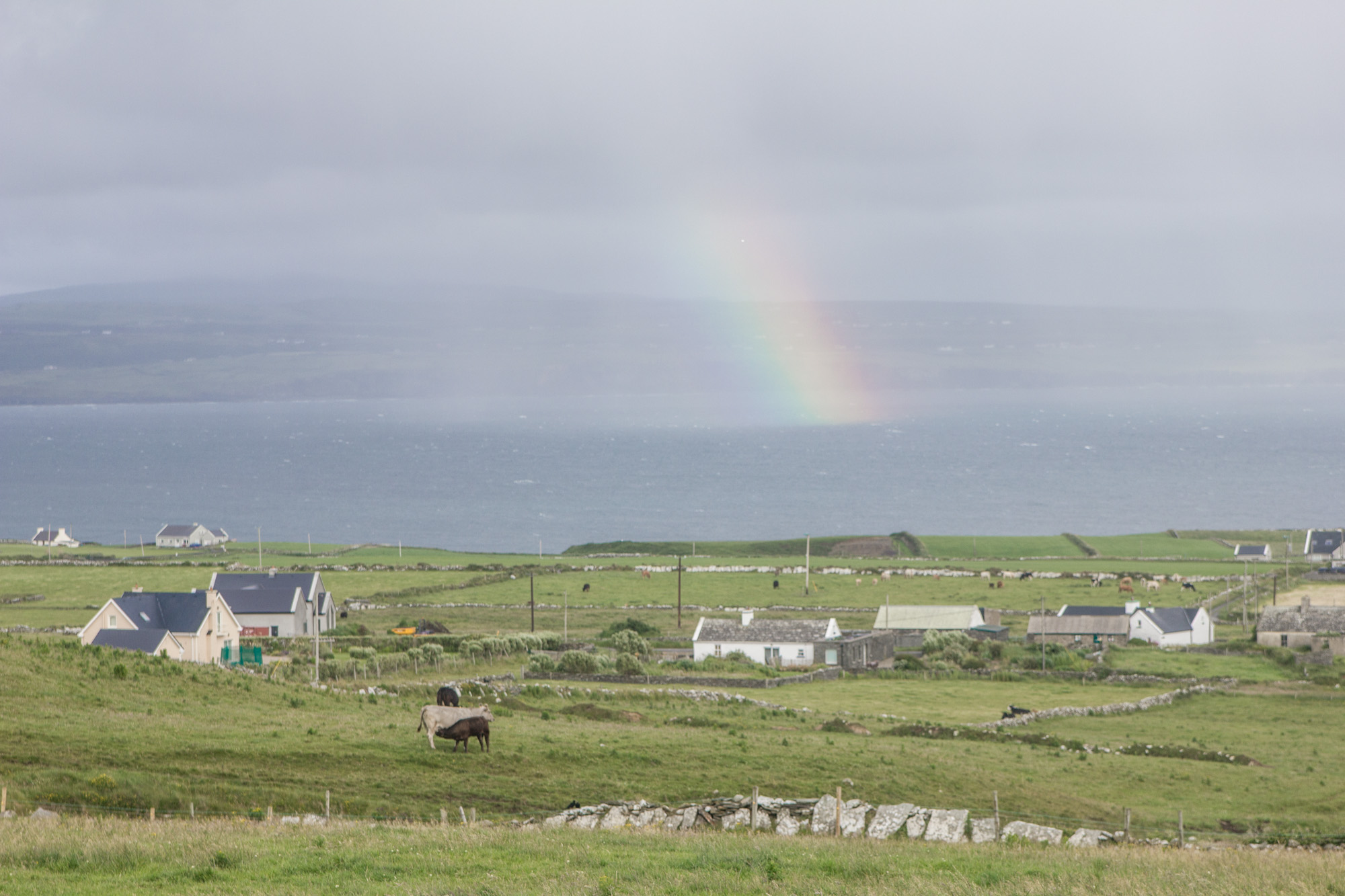 Rainbow in the countryside in Ireland, above green fields, white houses, and sheep