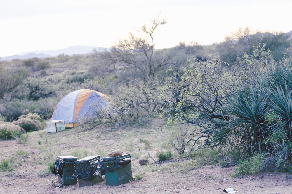 Tent in the Desert surrounded by desert scrub like cacti and bushes