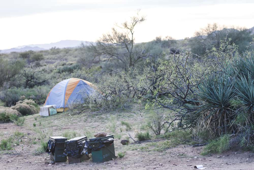 Tent in the desert in Arizona, surrounded by shrubs and a tree and next two three small trash bins during the conservation corps