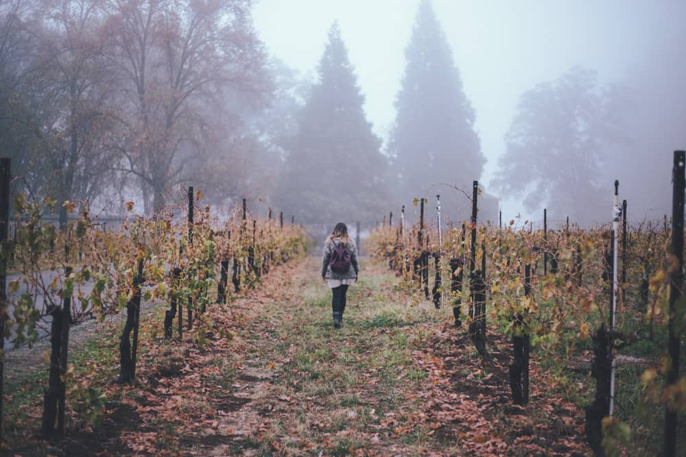 Madroña Vineyards in Placerville is a great place for adults to visit at Apple Hill!