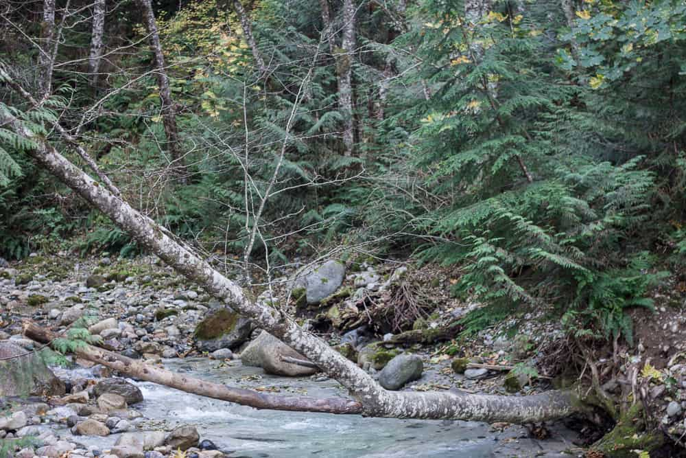 Trees and a river in Shannon Falls Provincial Park near Vancouver, Canada, BC