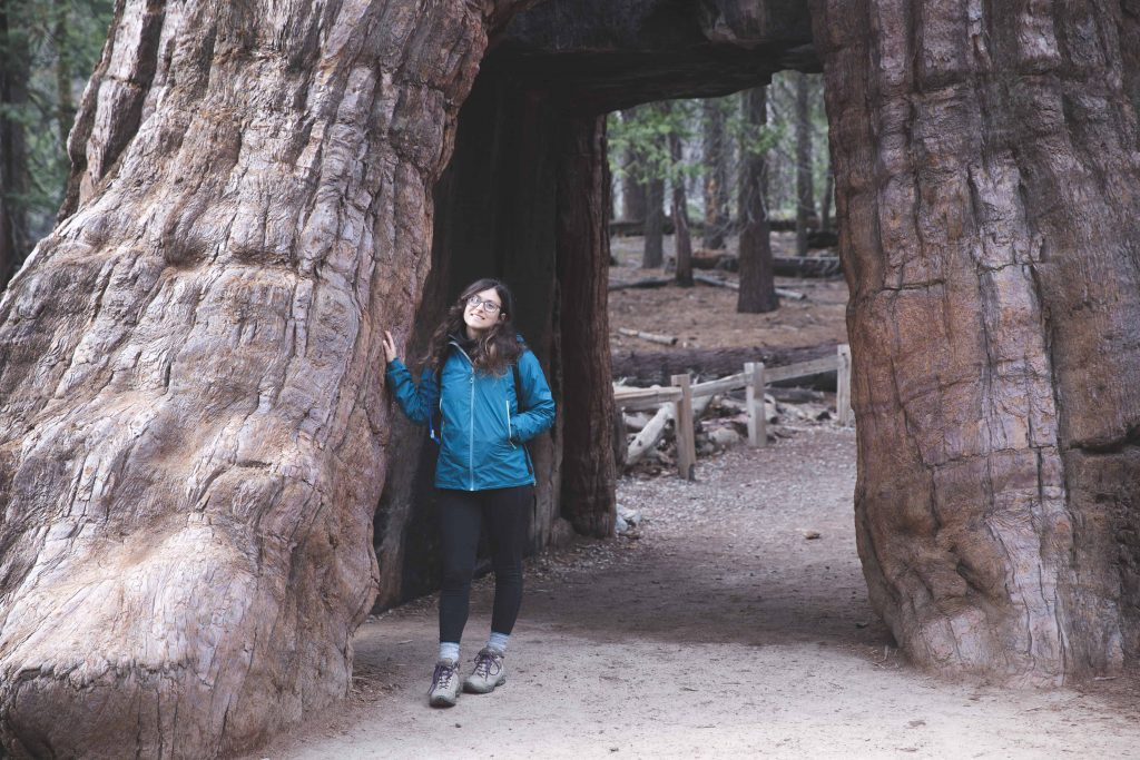 Mariposa Grove in Yosemite National Park is a great winter activity for your itinerary!
