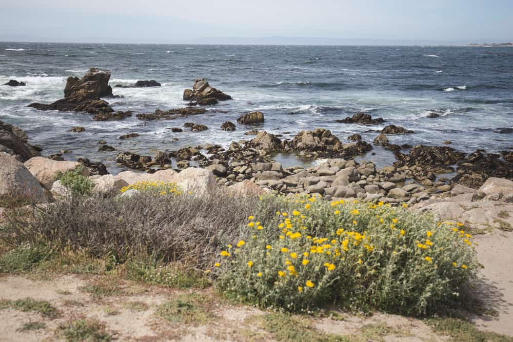 A beach and flowers on my bike ride through the 17-Mile Drive in Monterey, California