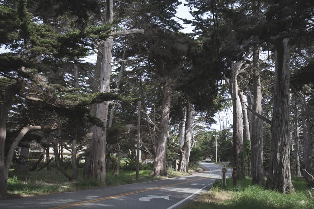 Cypress trees along a road during a bike ride on the 17-Mile Drive in Monterey, California