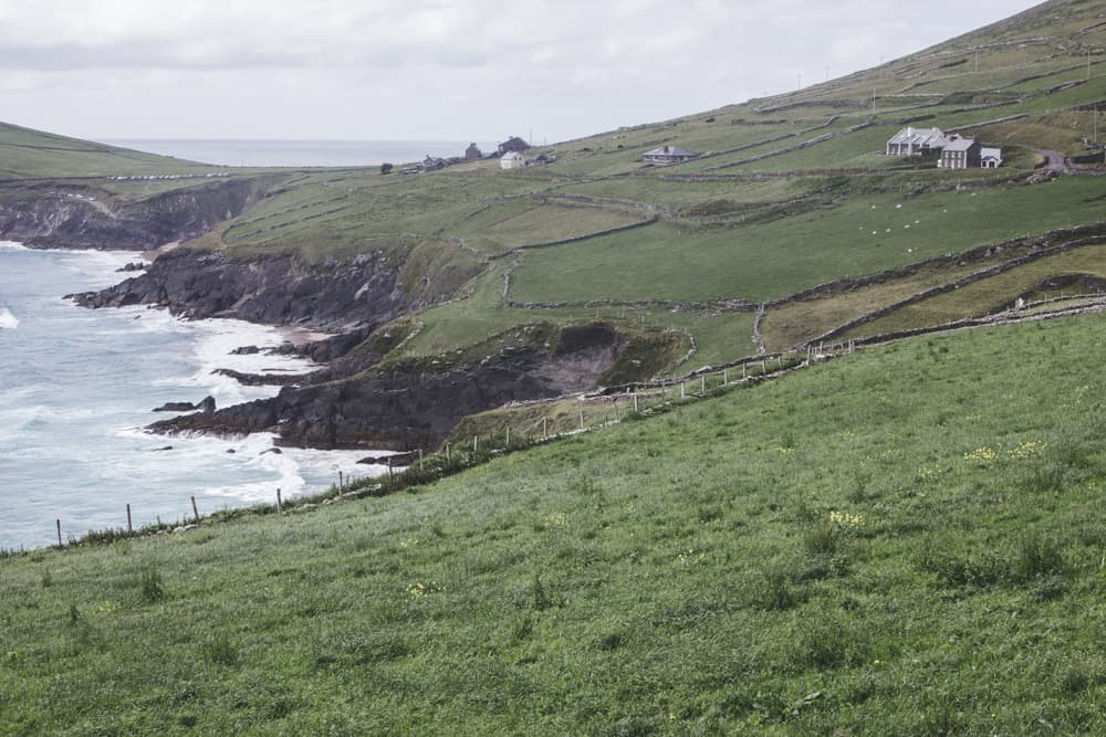 Slea Head Drive in Dingle in Ireland is full of views of beaches, rolling hills of green grass, stone fences, and adorable houses