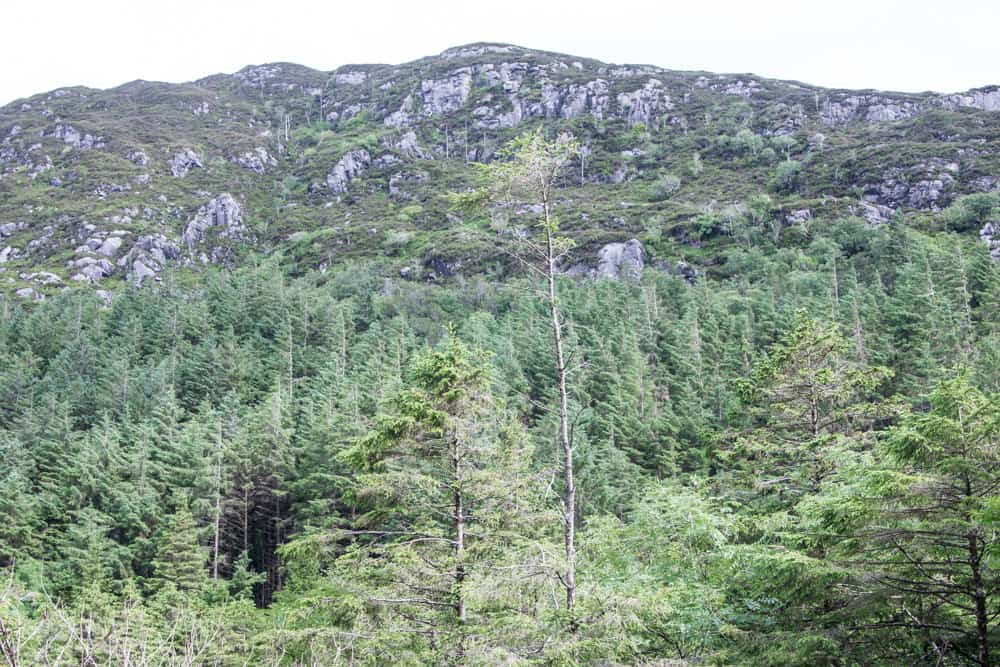 View of mountain and tall trees at Torc Mountain in Killarney National Park