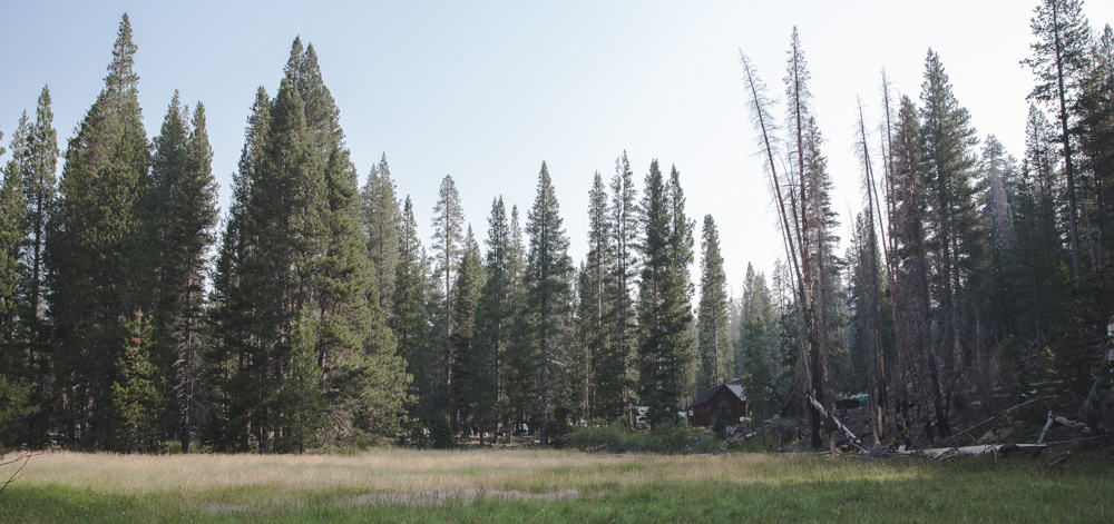 Cabin surrounded by meadow and tall pine trees seen along the trail to Rainbow Falls in mammoth in the Eastern Sierras near Mammoth in California