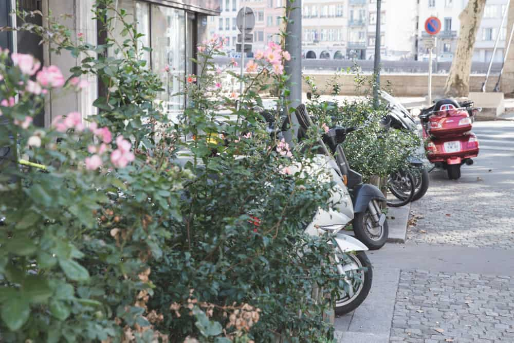 Pink roses and scooters parked on a cobblestone street in Lyon, France
