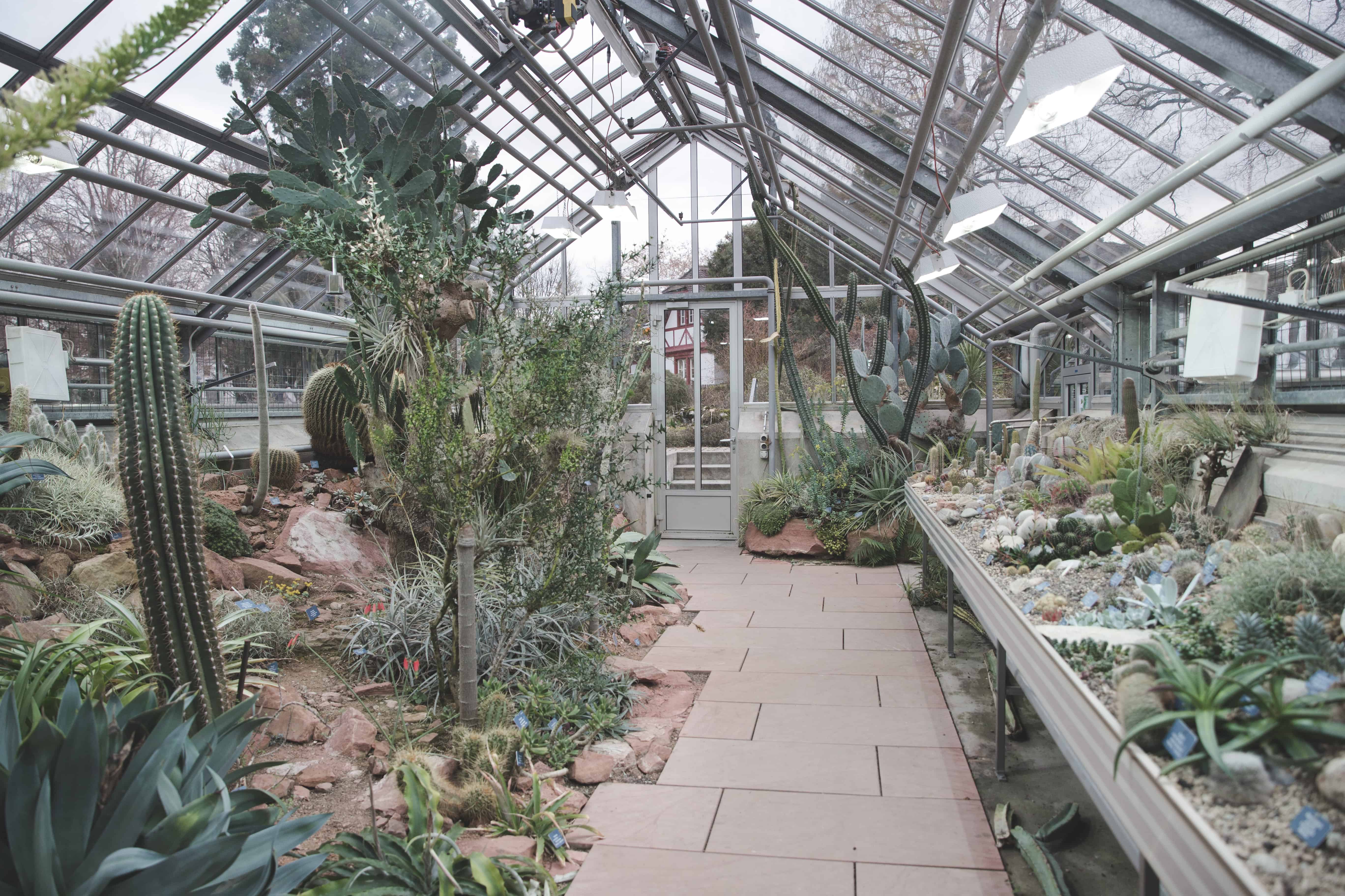 The University of Basel Botanical Gardens consist of greenhouses full of different plants and are a great rainy day activity