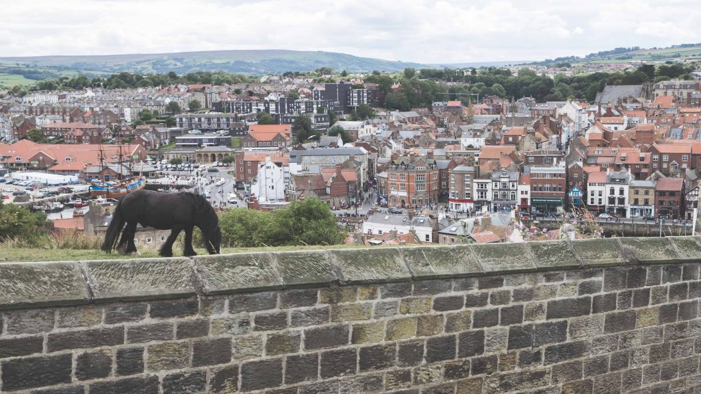 Pony at Whitby Abbey in Whitby, England - one of the Yorkshire coastal towns to visit