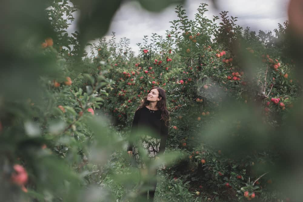 Apple orchard at Herzapfelhof Lühs in Altesland near Hamburg, Germany