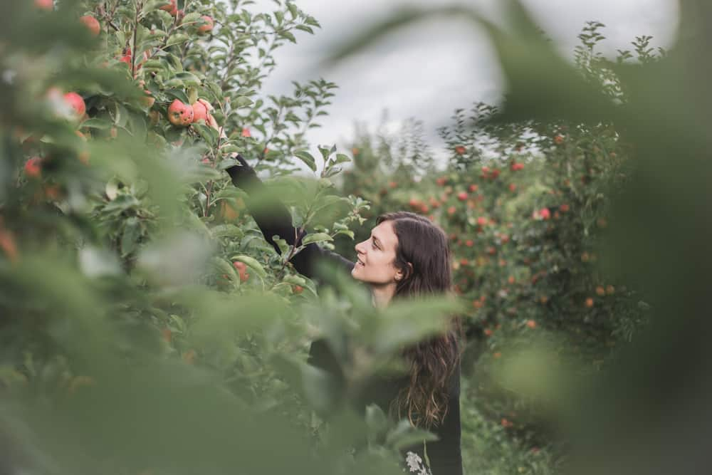 Kelsey reaching for an apple in the apple orchards at at Herzapfelhof Lühs in Altes Land, Germany