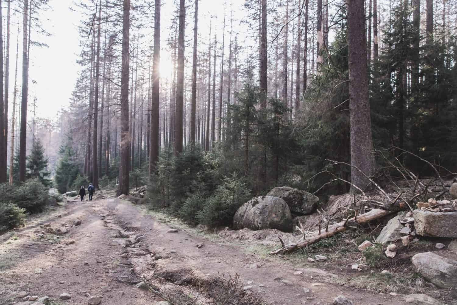 Hiking down from Brocken on a trail in the Harz Mountains in Harz National Park. Harz is one of the possible day trips from Hamburg!