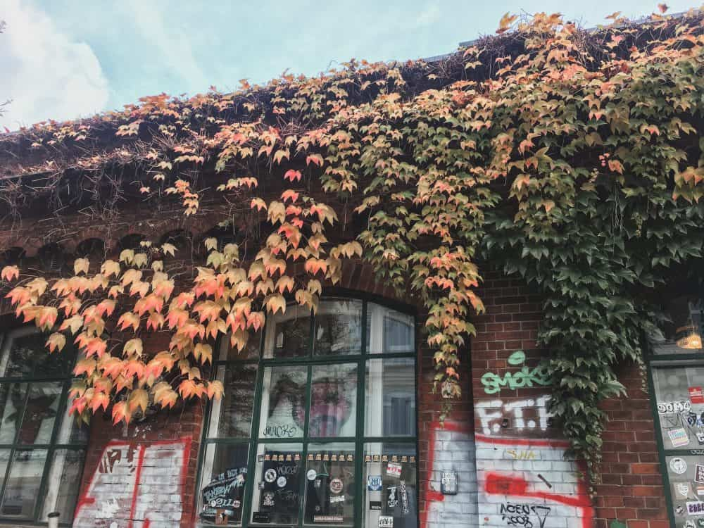 Ivy on a brick building in fall in Hamburg, Germany