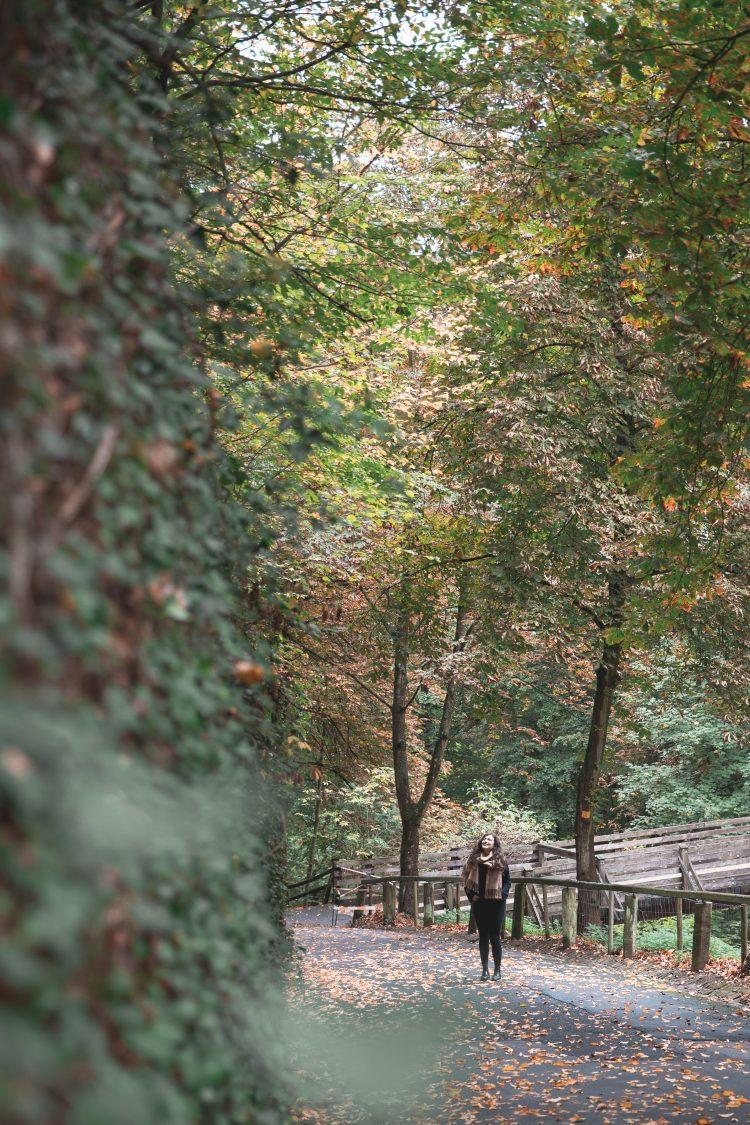 Fall in Germany with big trees with yellow leaves and Kelsey standing on a path