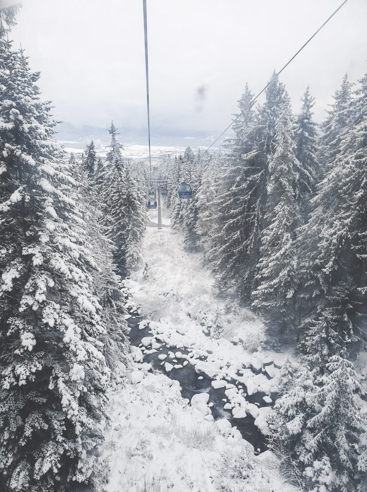 View of tall pine trees and a river in Bansko, Bulgaria from the Gondola in winter