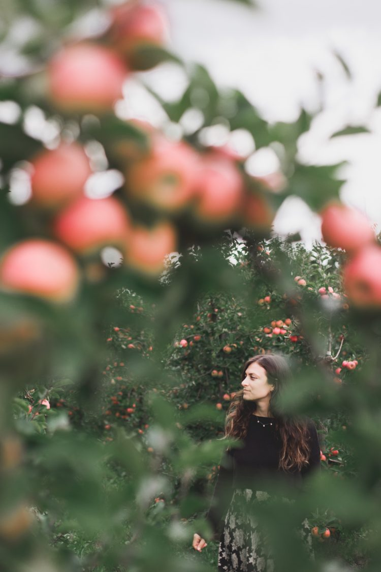 Apple Picking in Apple Hill, California