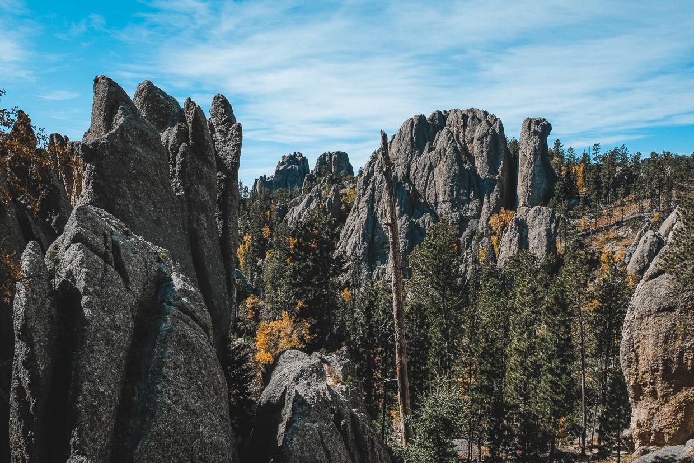 Needles Highway Fall Foliage on pine trees among large boulders