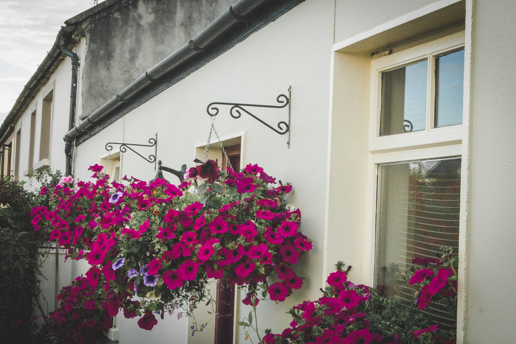 Colorful Flowers on a House in Killarney in Ireland