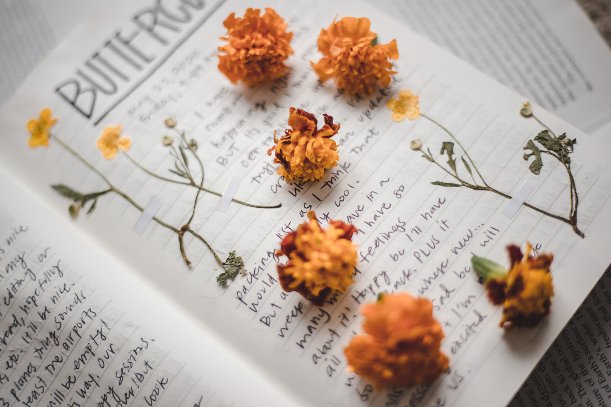 Pressed yellow buttercup flowers with orange marigold flowers on top of written words