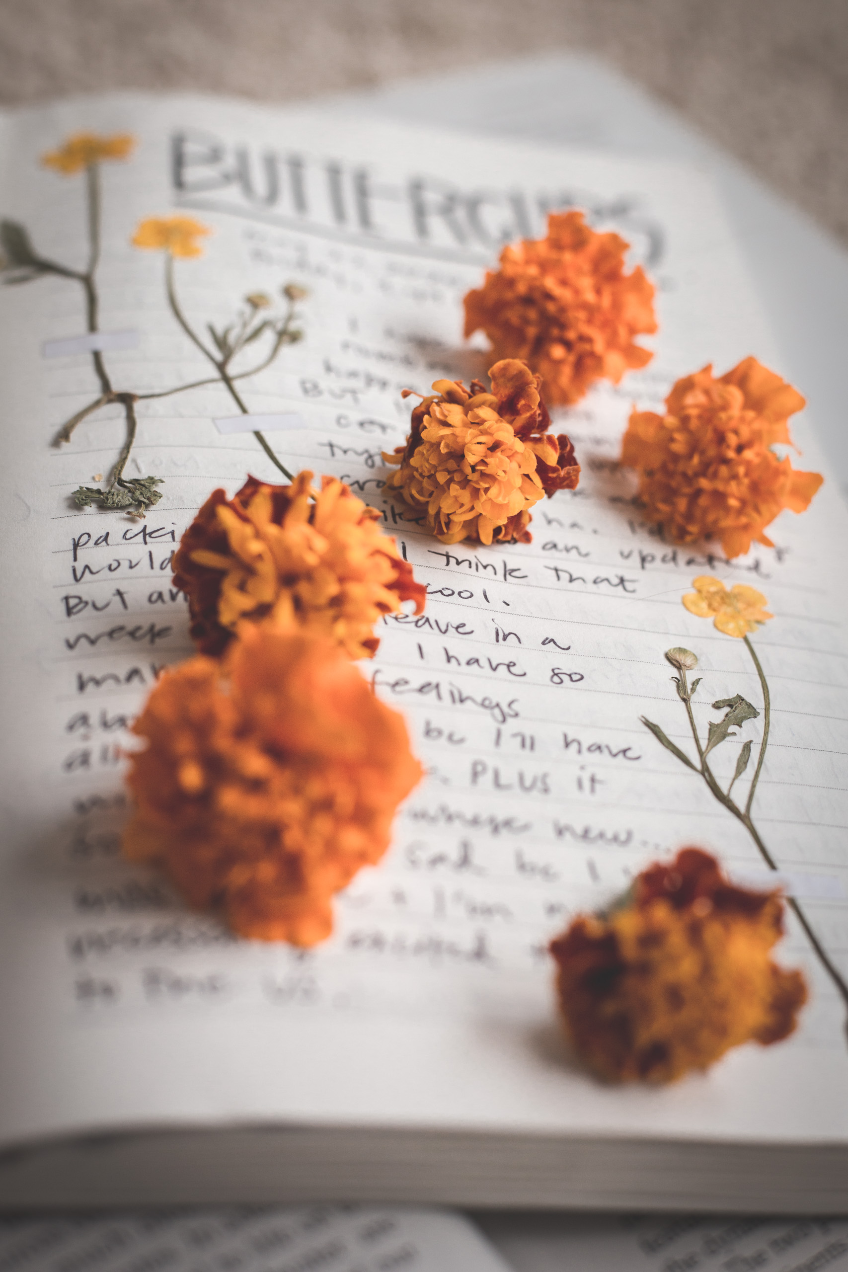 Notebook with small yellow buttercup flowers pasted in it, with black writing that says 'BUTTERCUPS' and writing on the page, sprinkled with orange marigold flowers