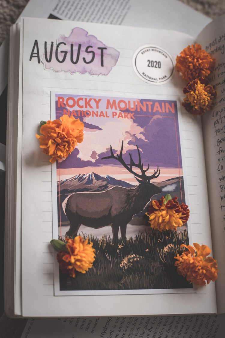 'Rocky Mountain National Park' postcard with an elk on it inside of travel journal, sprinkled with small orange marigold flowers