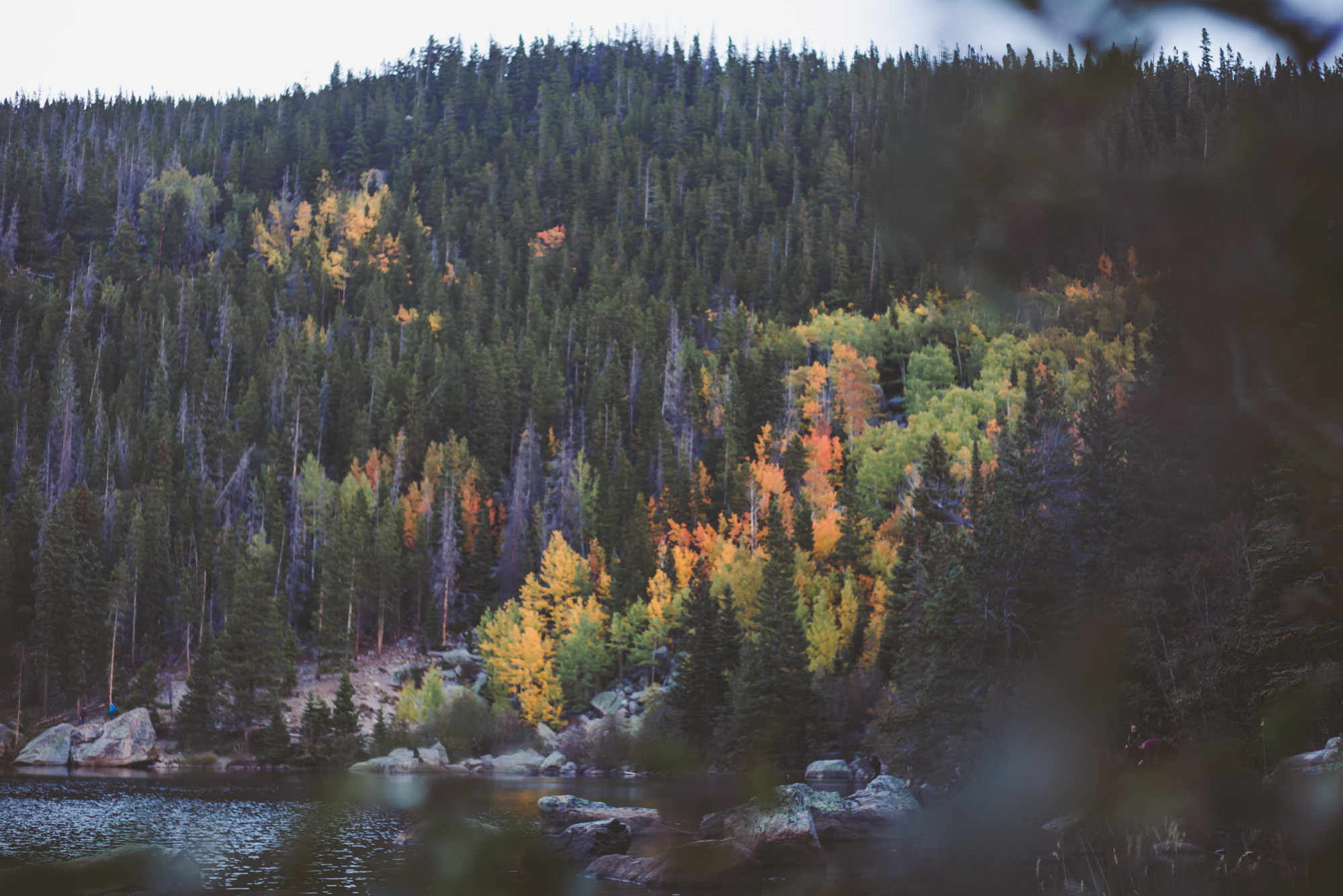 Fall Colors on Bear Lake in Rocky Mountain National Park in Colorado