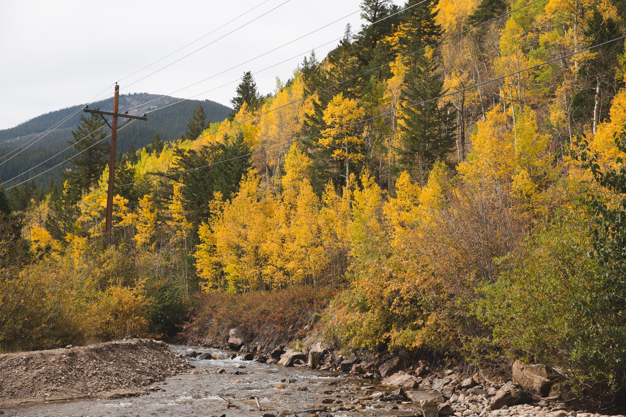 River on Guanella Pass in Colorado surrounded by yellow aspen trees, pine trees, and plants