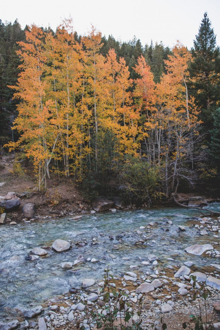 The Best Places to See Fall Color on Guanella Pass in Colorado