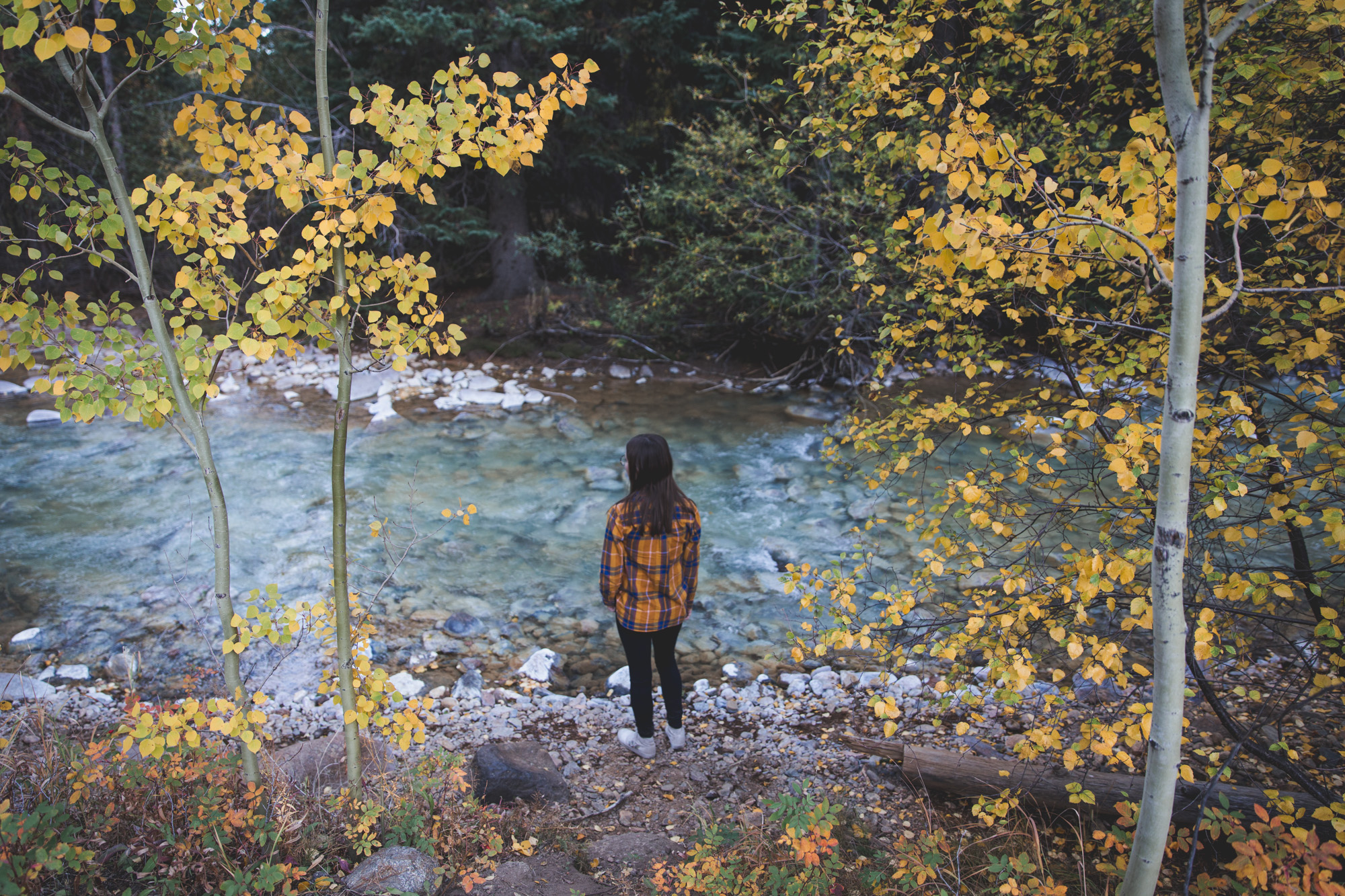 A girl standing in front of a blue creek, framed by aspen trees with yellow leaves, at the Whiteside Gulch in Colorado along Guanella Pass